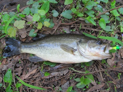 Where to catch largemouth bass in spring freshwater for Spring bass fishing