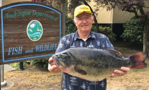 washington state record largemouth bass
