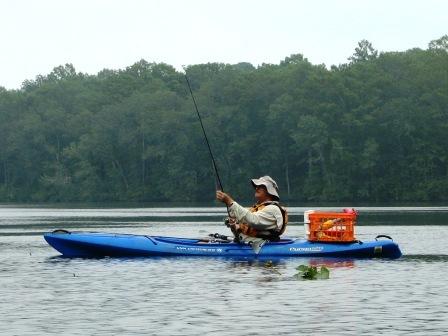 Cypress Swamp Kayaking