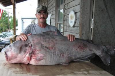 missouri-state-record-blue-catfish