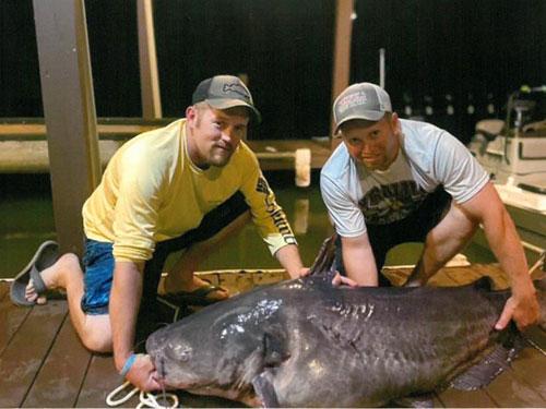 121-pound nc state record blue catfish Lake Gaston
